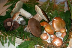 Funghi porcini protagonisti al Podere Riosto di Pianoro